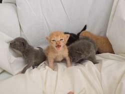 Lighthouse Kittens